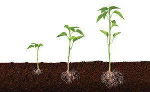 BASES para el crecimiento